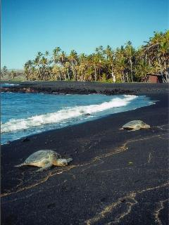 Black Sand Beach and Endangered Hawksbill Turtles! - Naalehu vacation rentals