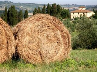 Agriturismo I Moricci-Moraiolo - Fabbrica di Peccioli vacation rentals