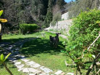 Lino's house toscana 2/8 pax - Fosdinovo vacation rentals