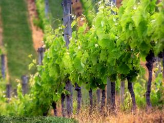 Agriturismo Borgo dellAschetto - Cerveteri vacation rentals