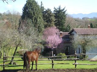 5 bedroom Farmhouse Barn with Internet Access in Civitella d'Agliano - Civitella d'Agliano vacation rentals