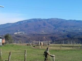 centro genesi equitazione - Rignano sull'Arno vacation rentals