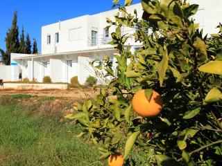 JLL - Bacharel - Alcantarilha vacation rentals