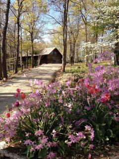 Cherokee Mountain Log Cabin Resort - Eureka Springs vacation rentals