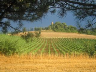Tuscany country apartment for 4 - Buonconvento vacation rentals