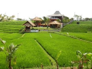 3 BR VILLA on BALI ricefields - Pererenan vacation rentals