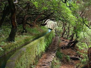 Vacation rentals in Madeira Islands