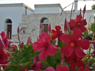 Lovely 2 bedroom House in San Vito dei Normanni - San Vito dei Normanni vacation rentals