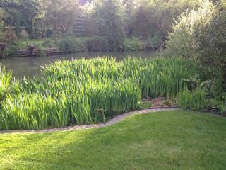 The Pond View Studio. Outfields Farm - Ravensden vacation rentals