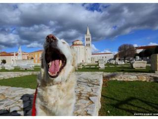 ZADAR  OLDTOWN  COMFORTABLE APARTMENT FOR 4 WLAN - Zadar vacation rentals