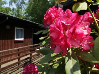 2 bedroom Chalet with Deck in Cenarth - Cenarth vacation rentals