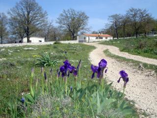 Offerta Vacanze sul Gargano in Agriturismo - Puglia vacation rentals