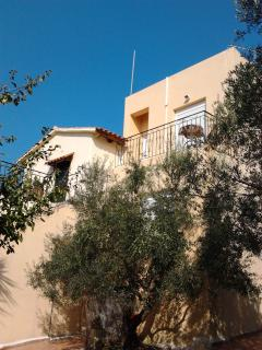 tzamika/ olive tree farm next to the sea  /apartem - Episkopi vacation rentals