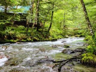 Cedarwood Cabin - Rhododendron vacation rentals