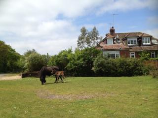 Forest Corner - New Forest vacation rentals