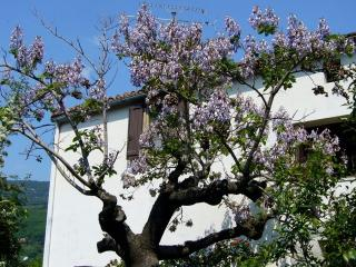 Cozy 2 bedroom Lodeve House with Internet Access - Lodeve vacation rentals