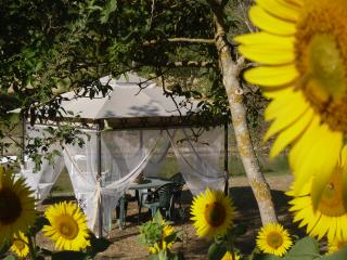 Farmhouse crickets and cicadas - Monte Santa Maria Tiberina vacation rentals