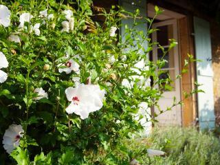 La Maison Perigordine - Saint-Cyprien vacation rentals