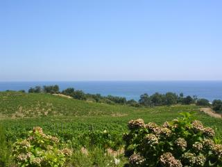 Nice Gite with Internet Access and A/C - Sari-Solenzara vacation rentals