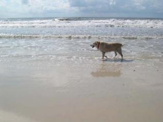 Clean, comfy, gulf view,pet friendly,Great rates!! - Port Saint Joe vacation rentals