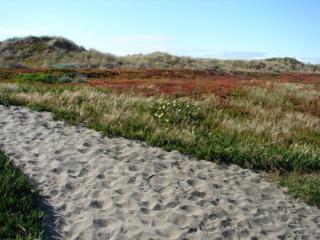 Sunset Ocean Beach House - San Francisco vacation rentals