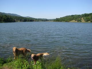 Private/Romantic Pet Friendly Cabin WV- Owl's Nest - Seneca Rocks vacation rentals