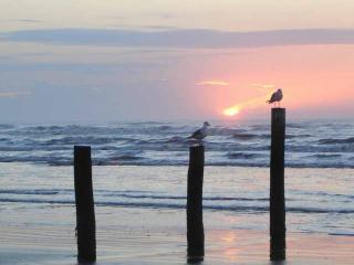 Jamaica Palms Beach Apt: Hot Tub - Small Pet OK! - Galveston vacation rentals