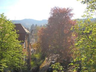 Bright Condo with Internet Access and Dishwasher - Freiburg im Breisgau vacation rentals
