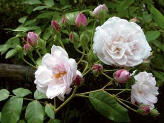 Roses & Berries - Trieste vacation rentals
