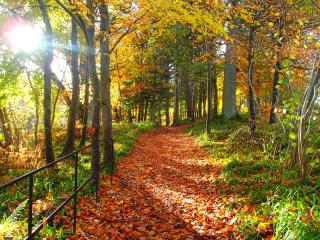 Kirkfield Gardens.Cedar Lodge - Lanark vacation rentals