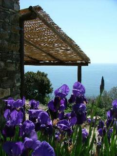 1 bedroom Cottage with A/C in Acciaroli - Acciaroli vacation rentals