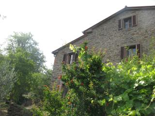 Splendid farmhouse among olive groves and vineyard - Cortona vacation rentals