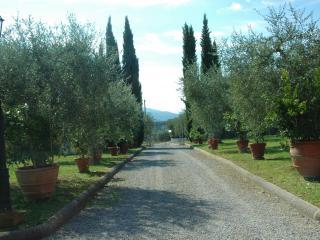 Azienda Agricola Melograno1 - Montecarlo vacation rentals
