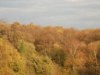 Little Woodlands - Chartham Hatch vacation rentals
