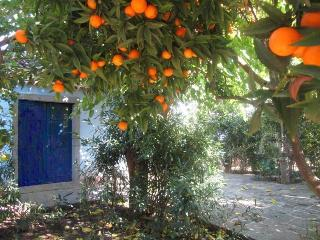 Rustic 1-room apartment with Orange garden! - Giardini Naxos vacation rentals