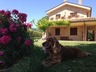 Beautiful 1 bedroom Condo in Campofilone with Internet Access - Campofilone vacation rentals