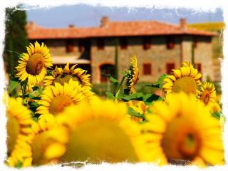 Desiderio, the wine lover home with eco pool - Acquasparta vacation rentals