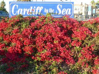 Beautiful Cardiff by the Sea - Cardiff by the Sea vacation rentals