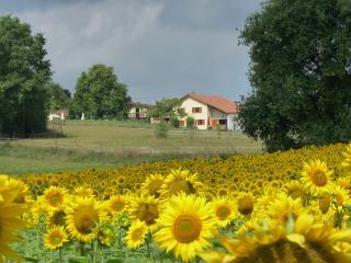 Domaine Mounoy, ambiance rurale et décontractée - Eauze vacation rentals