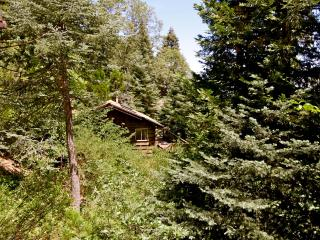 Nestled Inn - mountain cabin surrounded by trees - Lake Arrowhead vacation rentals