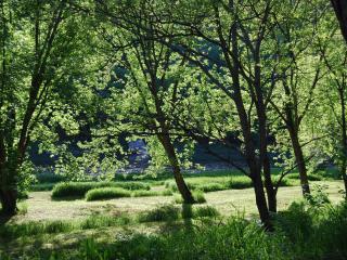 Delaware River Getaway Paradise - Cochecton vacation rentals