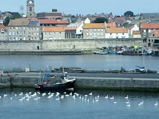 Mill Wharf, Gold graded, harbour view. Free WiFi - Berwick upon Tweed vacation rentals