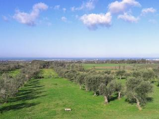 6 bedroom Villa in Il Terriccio, Costa Toscana, Tuscany, Italy : ref 2230611 - Collemezzano vacation rentals