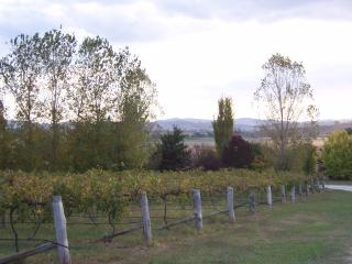 House in the vineyards - New South Wales vacation rentals
