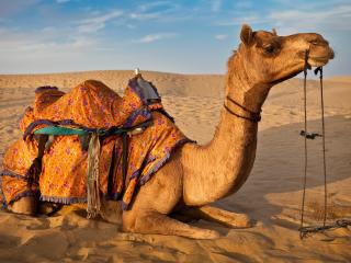 Yokoso Thar Desert Tours Jaisalmer - Jaisalmer vacation rentals