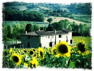 Ornellaia the super Tuscan wine home - Perugia vacation rentals