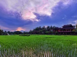 Nice 2 bedroom apartment for rent, rice field view - Celuk vacation rentals