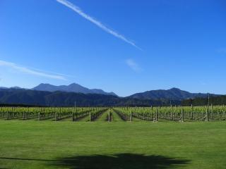 Straw Lodge Boutique Vineyard Accommodation - Blenheim vacation rentals