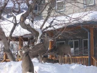 Ski Canadian Rockies, Kimberley- Fernie- Panarama. - Kimberley vacation rentals