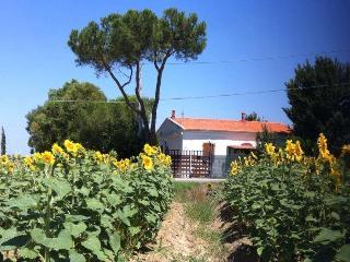 casa vacanza nel cuore della campagna livornese - Collesalvetti vacation rentals